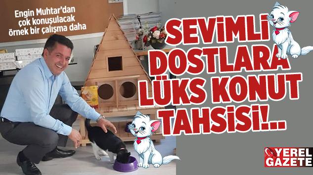 SOĞUK KIŞ GÜNLERİNE ÖZEL DAYANIKLI BARINMA EVLERİ..